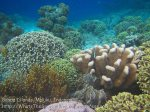 064_Ai-1_Better-Corals_20141115_IMG_5306.jpg