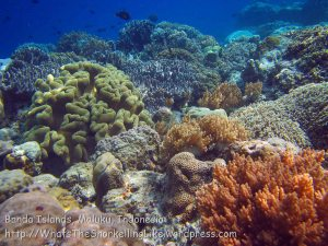 071_Ai-1_SoftCorals_20141122_IMG_6983.jpg