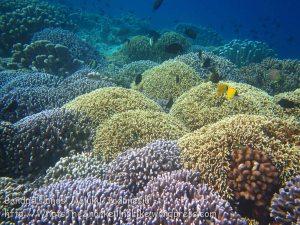 075_Ai-1_Corals_20141116_IMG_5444.jpg
