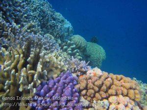 076_Ai-1_Corals_20141116_IMG_5545.jpg