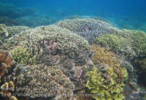 078_Ai-1_Corals_20141116_IMG_5494.jpg