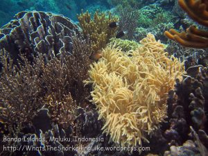 079_Ai-1_SoftCorals_20141122_IMG_7027.jpg