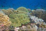 104_Ai-1_Meyers-Butterflyfish_20141116_IMG_5534.jpg