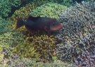 114_Ai-1_Yellowmargin-Triggerfish_20141123_IMG_7316.jpg