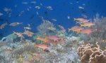 121_Ai-1_YellowfinGoatfish-StripedLargeEyeBream_20141121_IMG_6820.jpg