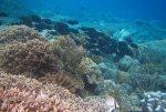 126_Ai-1_Surgeonfish_20141122_IMG_6960.jpg