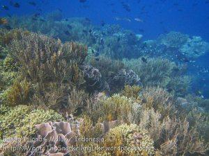 171_Ai-2a_Corals_20141115_IMG_5309.jpg
