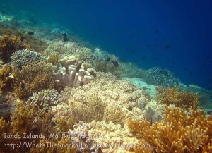 172_Ai-2a_Corals_20141115_IMG_5327.jpg
