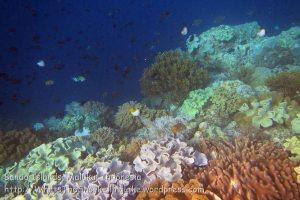 174_Ai-2a_Corals_20141115_IMG_5346.jpg