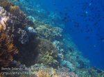 180_Ai-2ab_ReefEdge_20141119_IMG_5944.jpg