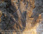 196_Ai-3ab_Fossilised-Coral_20141122_IMG_7191.jpg