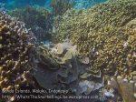 204_Ai-3ab_Corals_20141122_IMG_7115.jpg