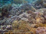 205_Ai-3ab_Corals_20141122_IMG_7108.jpg