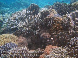 215_Ai-3bc_Corals_20141119_IMG_6011.jpg
