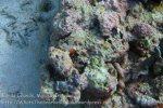 222_Ai-3bc_Fire-Dartfish_20141123_IMG_7630.jpg