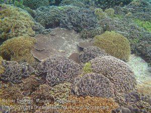 230_Ai-4a_Corals_20141120_IMG_6493.jpg