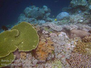 232_Ai-4a_Corals_20141120_IMG_6488.jpg