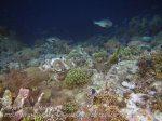 238_Ai-4b_Reef-Edge_20141120_IMG_6473.jpg