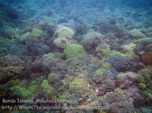 244_Ai-4bc_Deep-Corals_20141120_IMG_6460.jpg