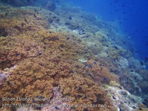 246_Ai-4bc_Deep-Soft-Corals_20141120_IMG_6457.jpg