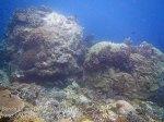 262_Ai-4e_Shabby-Corals_20141120_IMG_6406.jpg