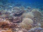 263_Ai-4e_Corals_20141120_IMG_6405.jpg