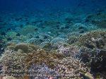 264_Ai-4e_Corals_20141120_IMG_6402.jpg