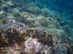 269_Ai-4f_Good-Corals_20141120_IMG_6393.jpg