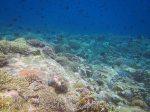 270_Ai-4f_Medium-Corals_20141120_IMG_6392.jpg
