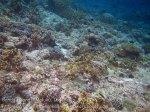 274_Ai-4f_Scrappy-Back-Reef_20141120_IMG_6374.jpg