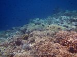 277_Ai-5a_Corals_20141120_IMG_6367.jpg