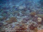 299_Ai-6a_Shalllows-Bumphead-Parrotfish_20141120_IMG_6302.jpg