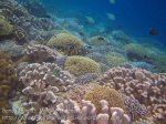301_Ai-6b_Corals_20141120_IMG_6298.jpg