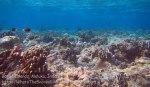 323_Manukan-West_Coral_20141117_IMG_5579.jpg