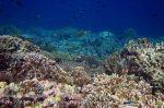 330_Manukan-North_Coral_20141117_IMG_5587.jpg