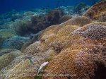 340_Manukan-NE_Coral_20141117_IMG_5635.jpg