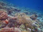 347_Manukan-East_Coral_20141117_IMG_5674.jpg
