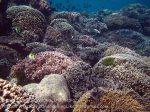 349_Manukan-East_Coral_20141117_IMG_5660.jpg
