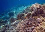 352_Manukan-East_Coral_20141117_IMG_5680.jpg