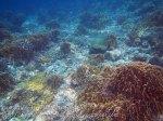 361_Manukan-SE_Coral_20141117_IMG_5703.jpg