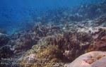 362_Manukan-SE_Sea-Krait_20141117_IMG_5684.jpg