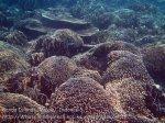 368_Manukan-South_Coral_20141117_IMG_5710.jpg