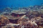 369_Manukan-South_Coral_20141117_IMG_5712.jpg