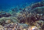 370_Manukan-South_Ornate-Butterflyfish_20141117_IMG_5725.jpg