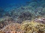 372_Manukan-SW_Coral_20141117_IMG_5736.jpg