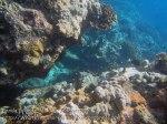 373_Manukan-SW_Coral_20141117_IMG_5744.jpg