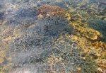 396_Hatta-1b_Shallow-Corals_20141127_IMG_8668.jpg