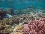 Indo_Bandas_429_Hatta-1e_Soft-Coral_20141127_IMG_8549