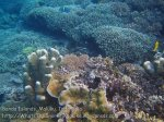 461_Hatta-2ab_Shallow-Corals_20141125_IMG_8060.jpg