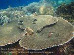Indo_Bandas_462_Hatta-2ab_Table-Corals_20141125_IMG_8072